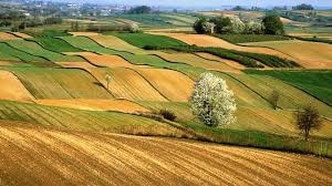 Hazine tarım arazisi kiralamasında son başvuru günü 19 Kasım!