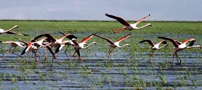 Ramsar Sözleşmesi